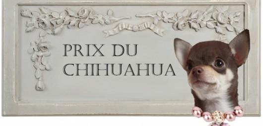 165215-prix-a-leva-du-chihuahua