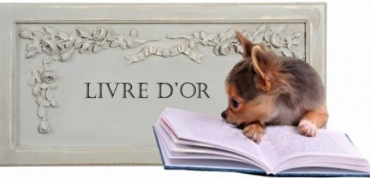 165221-livre-d-or-chihuahua
