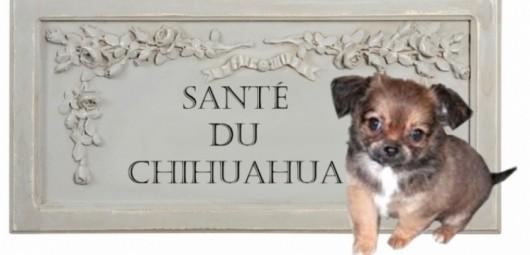 santa-chihuahua