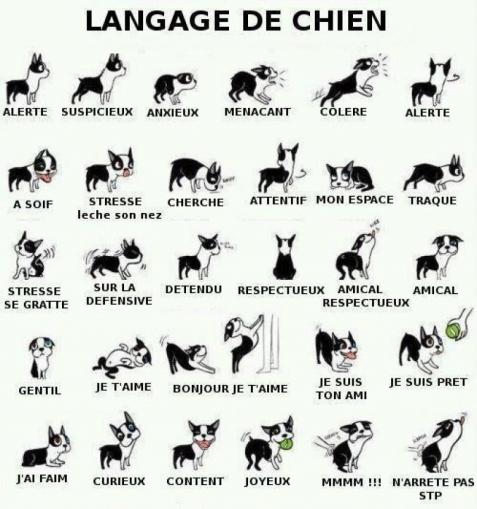 243796-165588-chihuahua-intelligent-petit