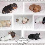 chichi-nouveau nés