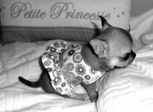 un vrai petit chien