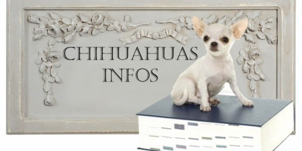information-chihuahua