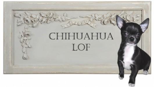 certificat-de-naissance-lof-du-chihuahua