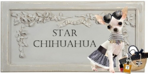 165301-habiller-le-chihuahua