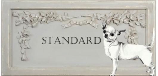 165332-standard-du-chihuahua