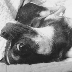 un chien chihuahua peut être considéré comme un enfant